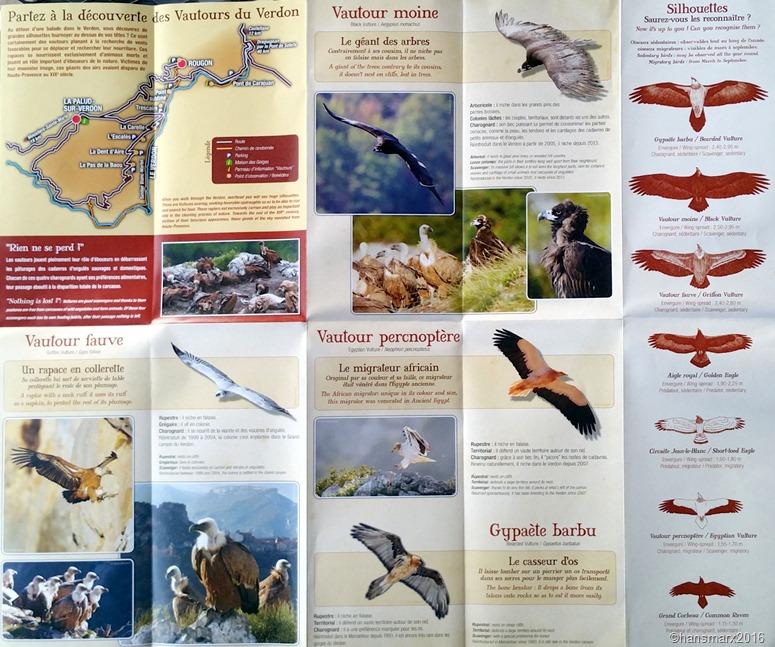 Vautours Raubvögel Vultures Esparron_1